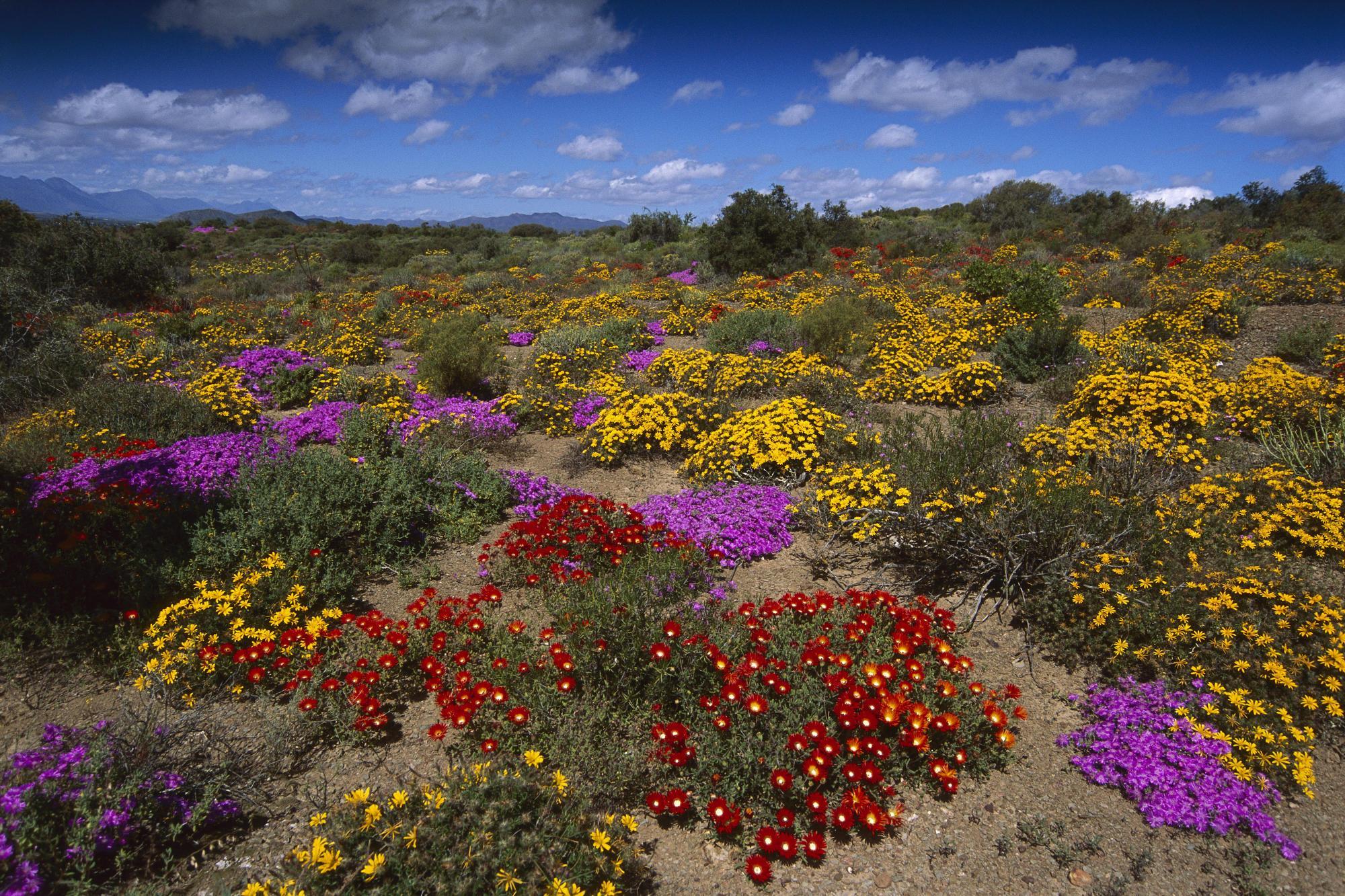 flores desierto foto