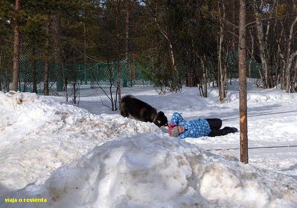 campamento sami