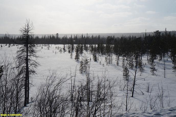 tundra artica