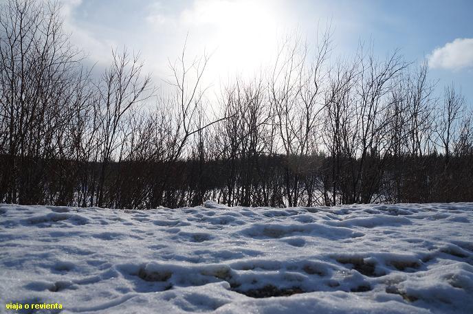 tundra rusia