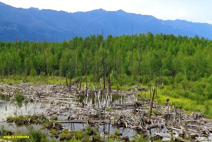 bosques siberia oriental