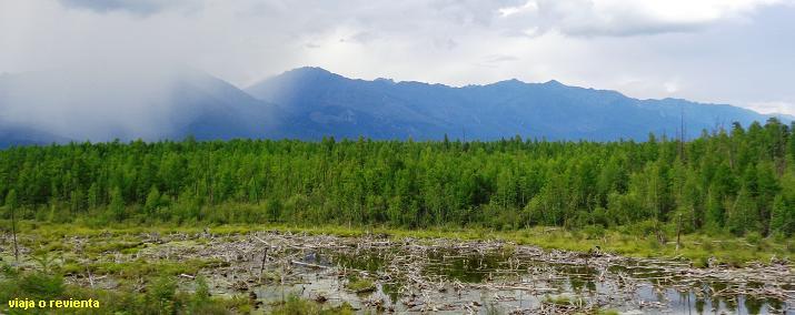 bosques siberia
