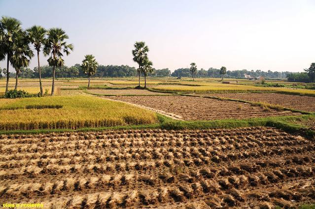paisaje bengala