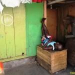 GHANA. EL OJO DEL SAHARA Y LA TROPICAL ACCRA